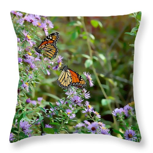 Butterfly Throw Pillow featuring the photograph Two Monarchs by Edward Sobuta