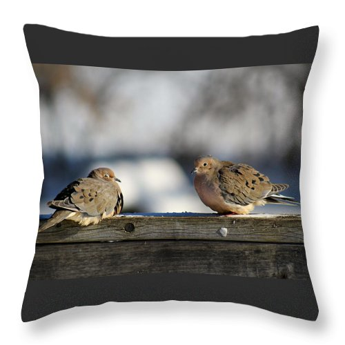 Birds Throw Pillow featuring the photograph Two Mourning Doves by Denise Irving