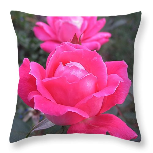 Rose Throw Pillow featuring the photograph Two Pink Double Roses by MTBobbins Photography