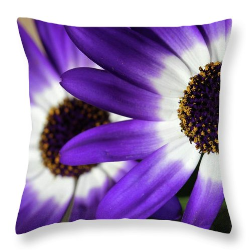 Flower Throw Pillow featuring the photograph Two Purple N White Daisies by Sabrina L Ryan
