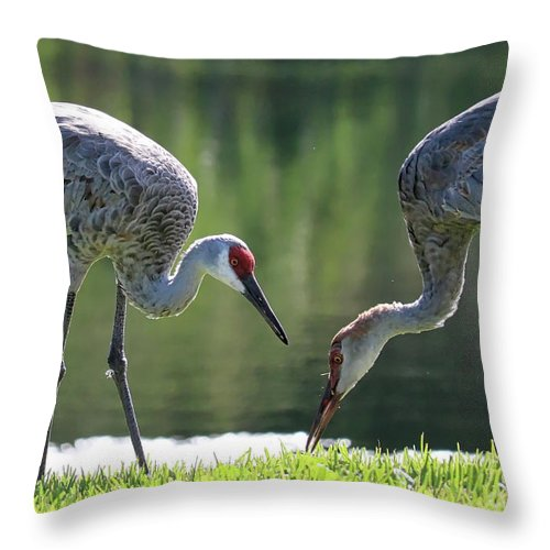 Two Sandhills Throw Pillow featuring the photograph Two Sandhills By The Water by Carol Groenen
