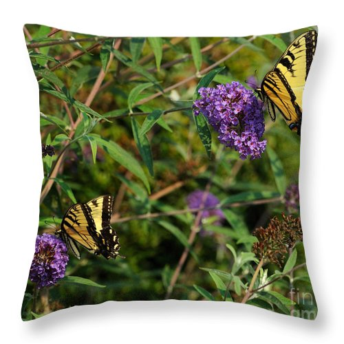 Butterfly Throw Pillow featuring the photograph Two Swallowtail Butterflies 2 by Edward Sobuta