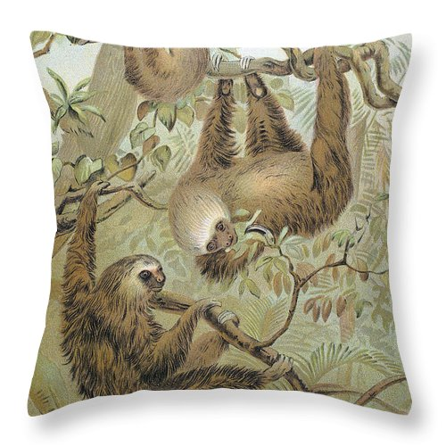 1904 Throw Pillow featuring the photograph Two-toed Sloth by Granger