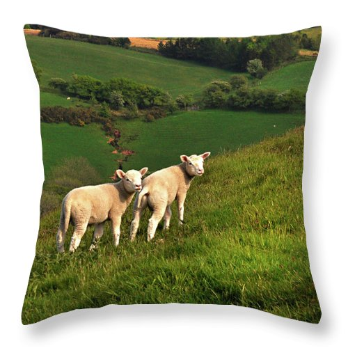 Wales Throw Pillow featuring the digital art Two Welsh Lambs by Vicki Lea Eggen