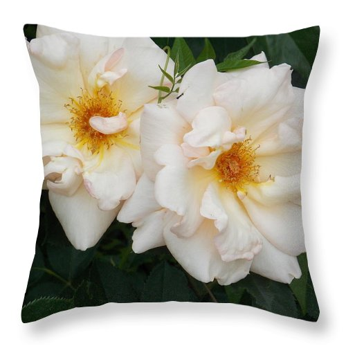 White Flowers Throw Pillow featuring the photograph Two White Flowers by Catherine Gagne