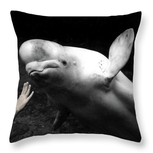 Beluga Throw Pillow featuring the photograph Two Worlds Reach Out by Wayne King