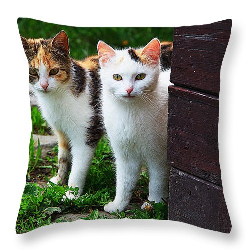 Cat Art Throw Pillow featuring the painting Two Young Cats by Queso Espinosa