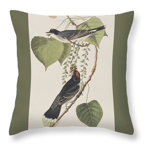 Tyrant Fly Catcher Throw Pillow featuring the painting Tyrant Fly Catcher by John James Audubon