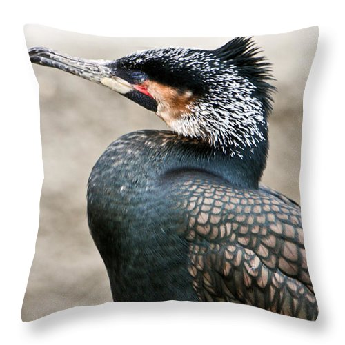 Ugly Throw Pillow featuring the photograph Ugly Bird by Douglas Barnett