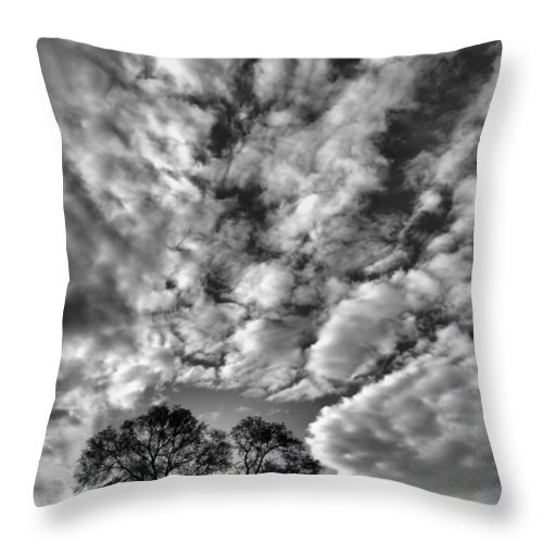 Trees Throw Pillow featuring the photograph Under Cover In Black And White by Tara Turner