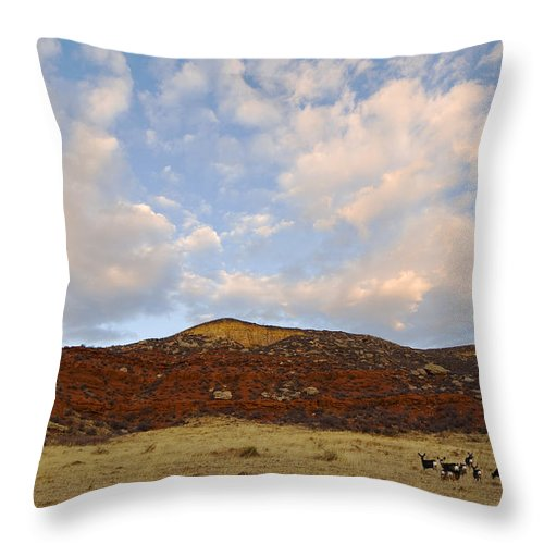 Mule Deer Throw Pillow featuring the photograph Under The Colorado Sky by Jim Fillpot