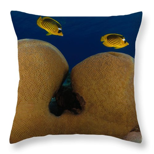 Diagonal Throw Pillow featuring the photograph Under The Sea by Hagai Nativ