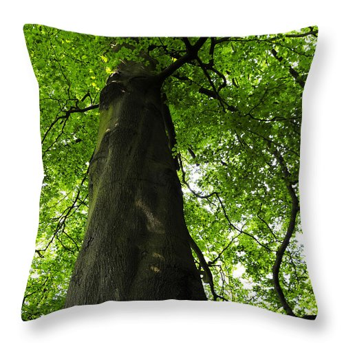 Countryside Throw Pillow featuring the photograph Under The Tree by Svetlana Sewell