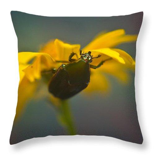 June Throw Pillow featuring the photograph Underside Of Daisy by Douglas Barnett