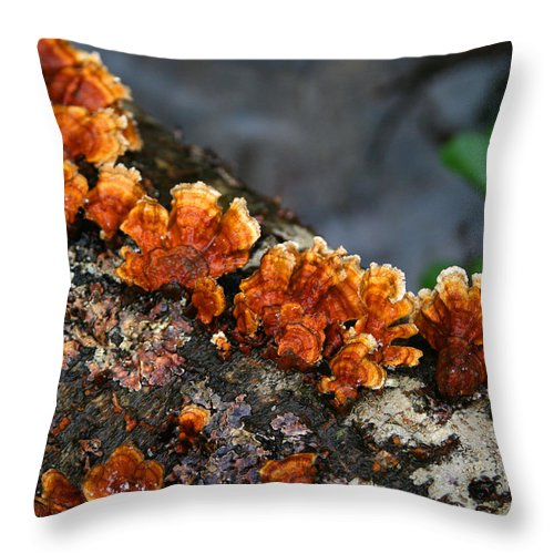 Bright Orange Nature Wet Forest Fungus Tree Wood Closeup Macro Throw Pillow featuring the photograph Unexpected Brightness by Andrei Shliakhau