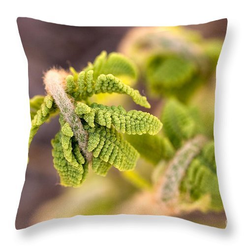Nature Throw Pillow featuring the photograph Unfolding Fern Leaf by Louise Heusinkveld