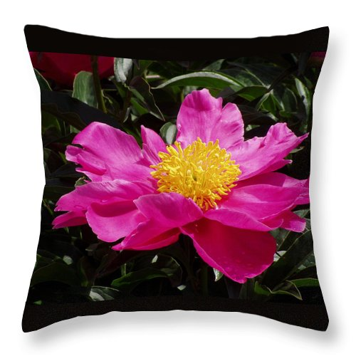 Rose Throw Pillow featuring the photograph Unfolding by Ian MacDonald