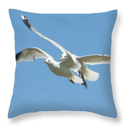Gift Throw Pillow featuring the photograph United We Fly by Barbara S Nickerson