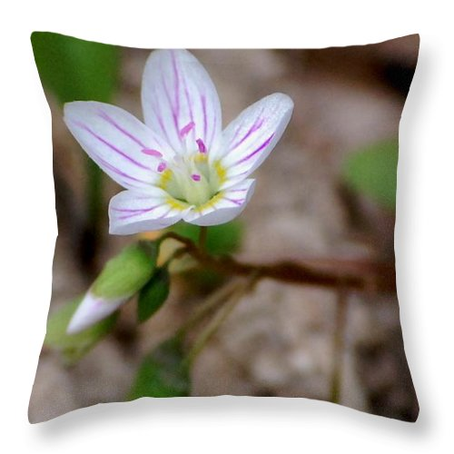 Floral Throw Pillow featuring the photograph Untitiled Floral by David Lane