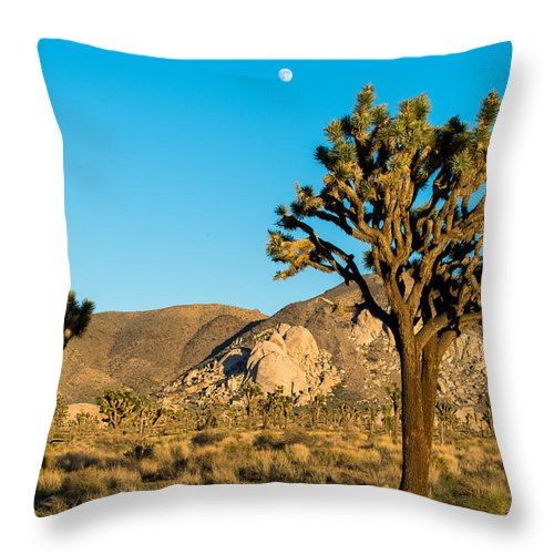 Tree Throw Pillow featuring the photograph Untouched Joshua Tree National Park by Andre Distel