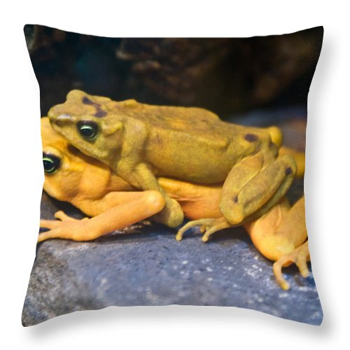 Frogs Throw Pillow featuring the photograph Up Close And Personal by Douglas Barnett