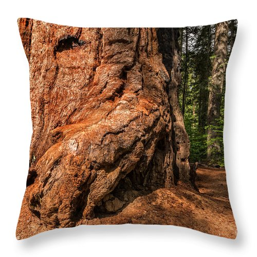 Tree Throw Pillow featuring the photograph Up Close To A Giant by Dianne Phelps