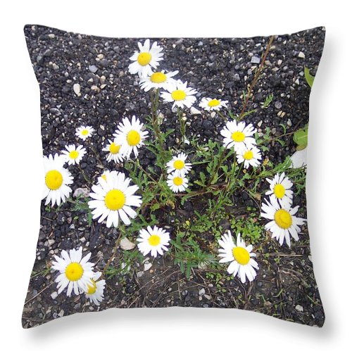 Daisy Nature Asphalt Flowers Throw Pillow featuring the photograph Up From The Asphalt I by Anna Villarreal Garbis