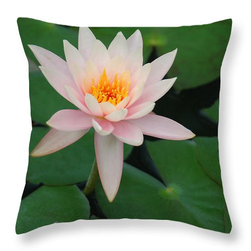 Water Lily Throw Pillow featuring the photograph Up From The Depths by Suzanne Gaff
