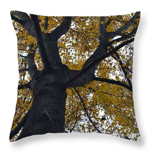 Tree Throw Pillow featuring the photograph Up by Michael Hills