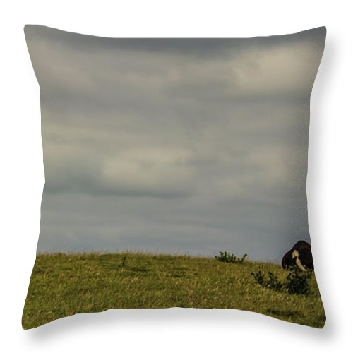 Cow Throw Pillow featuring the photograph Up On The Hill by Martin Newman