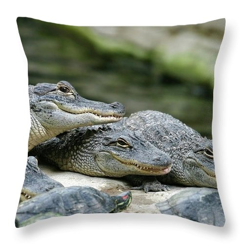 Alligator Throw Pillow featuring the photograph Up to No Good by Anthony Jones