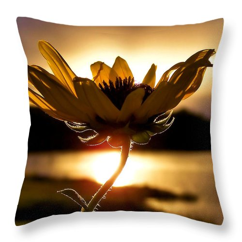 Flower Throw Pillow featuring the photograph Uplifting by Karen Scovill