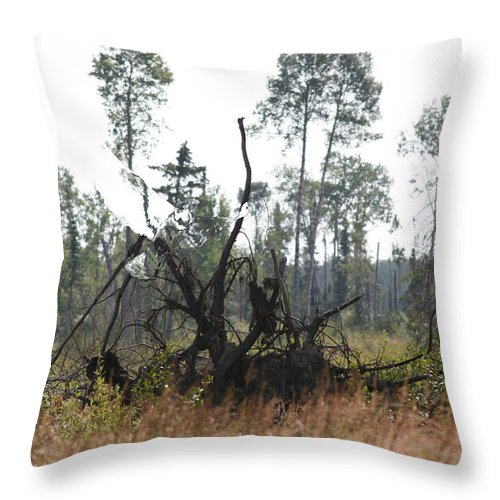 Roots Tree Stump Hawk Bird Wild Forest Nature Feeling Abstract Throw Pillow featuring the photograph Uprooted by Andrea Lawrence