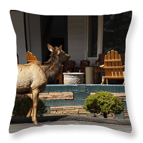 Elk Throw Pillow featuring the photograph Urban Elk by Marilyn Hunt