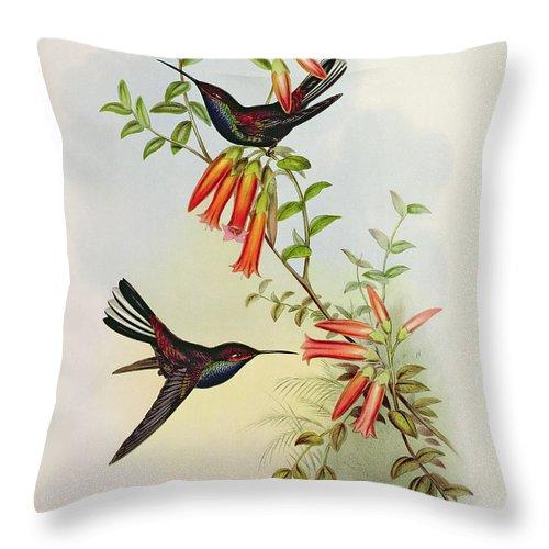 Urochroa Throw Pillow featuring the painting Urochroa Bougieri by John Gould