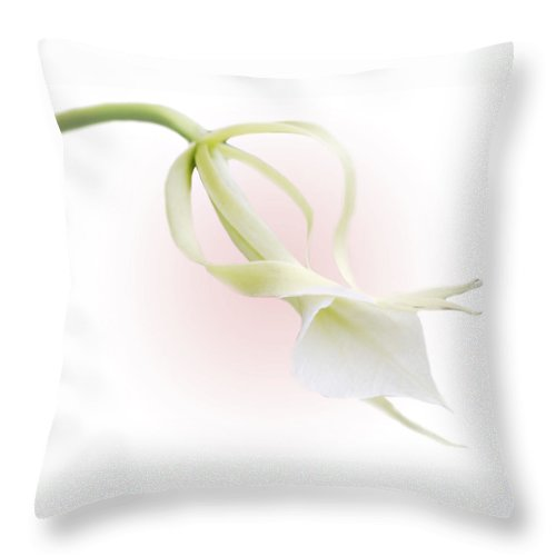 Love Throw Pillow featuring the photograph Valentine Orchid by Marilyn Hunt