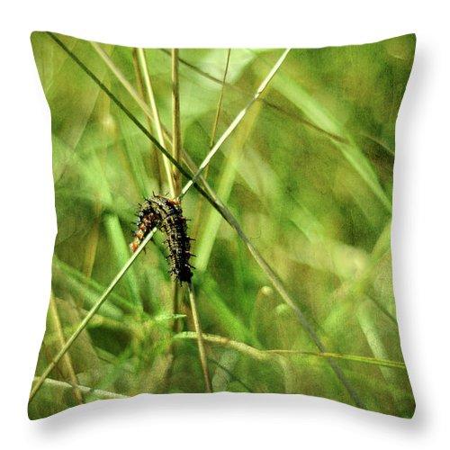 Vanessa Atalanta Throw Pillow featuring the photograph Vanessa Atalanta Red Admiral Butterfly Larvae by Rebecca Sherman