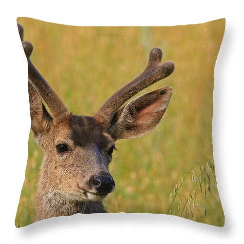 Mule Throw Pillow featuring the photograph Velvet by Craig Corwin