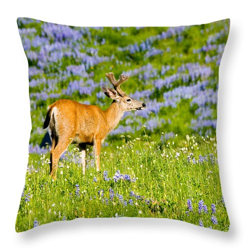Deer Throw Pillow featuring the photograph Velvet On Lupine by Mike Dawson