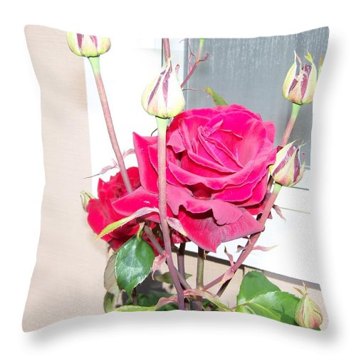 Digital Photography Artwork Throw Pillow featuring the photograph Velvet Red Rose Of Sharon by Laurie Kidd