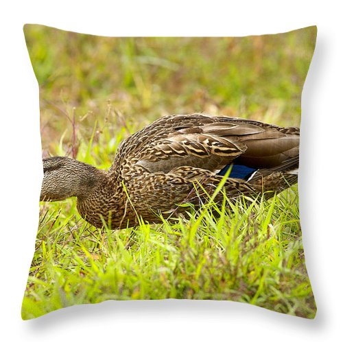 Duck Throw Pillow featuring the photograph Vermont Mallard Portrait by Deborah Benoit