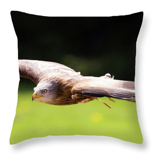 Kite Throw Pillow featuring the photograph Very Low Pass by Angel Ciesniarska