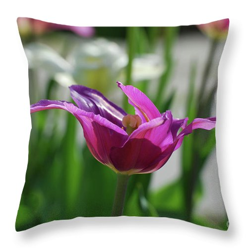 Tulip Throw Pillow featuring the photograph Very Pretty Blooming Purple Tulip With Spikey Petals by DejaVu Designs