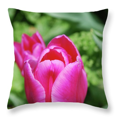 Tulip Throw Pillow featuring the photograph Very Pretty Dark Pink Tulip Flower Blossom by DejaVu Designs