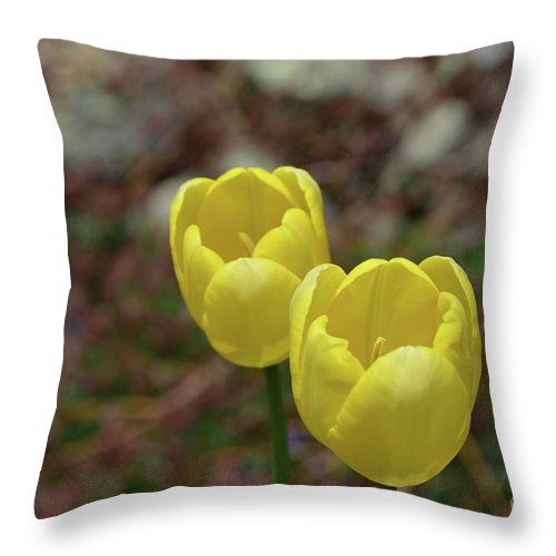 Tulip Throw Pillow featuring the photograph Very Pretty Pair Of Flowering Yellow Tulip Blossoms by DejaVu Designs