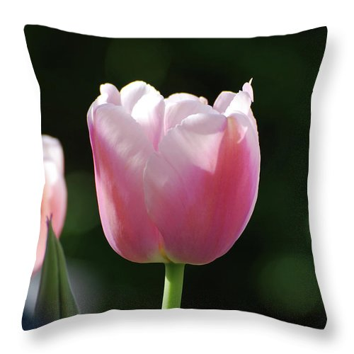 Throw Pillow featuring the photograph Very Pretty Pale Pink Tulip Blossom In Spring by DejaVu Designs