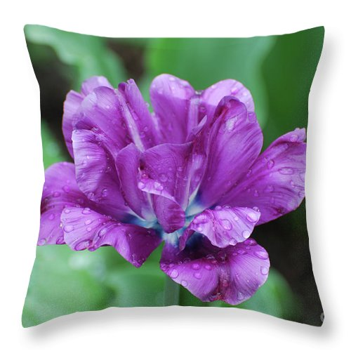 Tulip Throw Pillow featuring the photograph Very Pretty Purple Tulip With Dew Drops On The Petals by DejaVu Designs