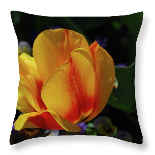 Tulip Throw Pillow featuring the photograph Very Pretty Yellow And Red Tulip Flower Blossom by DejaVu Designs