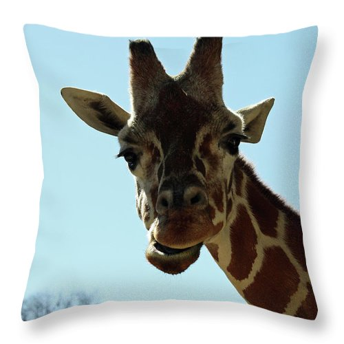 Maryland Throw Pillow featuring the photograph Very Tall Giraffe by Ronald Reid