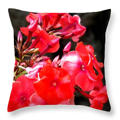 Red Throw Pillow featuring the photograph Vibrant by Ian MacDonald
